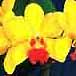 catt-flowers76x76.jpg