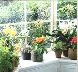 orchids-in-window