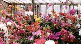 toomanyorchids.jpg
