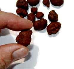 Leca-in-hand-lg02.jpg