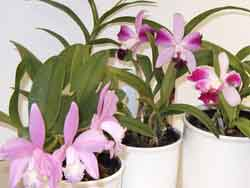 orchids humidity