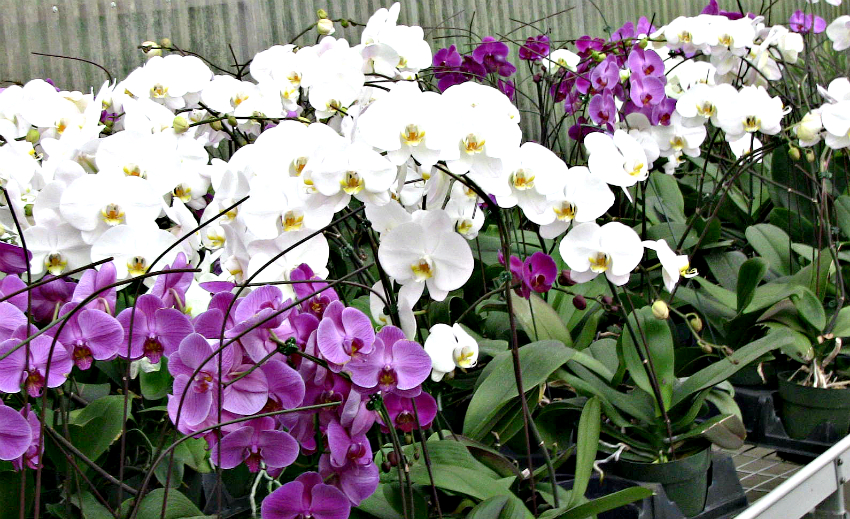 how to take care of orchids at home